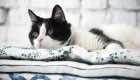 DIY Stylish Cat Bed-4